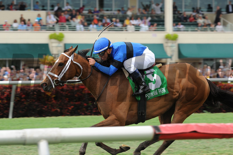 Regalo Mia wins the 2013 Florida Sunshine Millions Filly and Mare Turf.<br /> Coglianese Photos