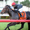 Mr Speaker wins the 2013 Dania Beach Stakes.<br /> Coglianese Photos/Kenny Martin