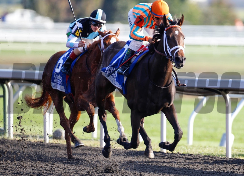 "My Conquestadory with Eurico Da Silva aboard comes from last to win the The 62nd running of The Darley Alcibiades (Grade 1) ""Win and You're In Juvenile Fillies Division"" at Keeneland, Lexington, Ky. on October 4, 2013.<br /> Mark Mahan Photo"
