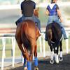 Animal Kingdom, Meydan, March 28th, 2013, photo by Mathea Kelley, Dubai World Cup 2013,