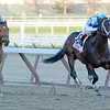 Verrazano with jockey John Velazquez wins the 89th running of The Wood Memorial at Aqueduct in Ozone Park, N.Y. April 6, 2013.  Photo by Skip Dickstein