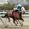 Withgreatpleasure wins the 37th running of The Ruffian at Aqueduct in Ozone Park, N.Y. April 6, 2013.  Photo by Skip Dickstein