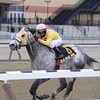 Head Heart Hoof wins the 2013 Toboggan Stakes.<br /> Coglianese Photos/Joe Labozzetta