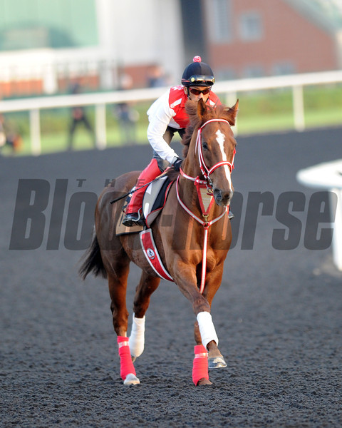 Taiesei legend Meydan, March 28th, 2013, photo by Mathea Kelley, Dubai World Cup 2013, Dubai Golden Shaheen;