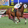 Teaks North wins the 2013 Sunshine Millions Turf.<br /> Coglianese Photos/Courtney Heeney