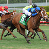 Regalo Mia wins the 2013 Florida Sunshine Millions Filly and Mare Turf.<br /> Coglianese Photos/Courtney Heeney