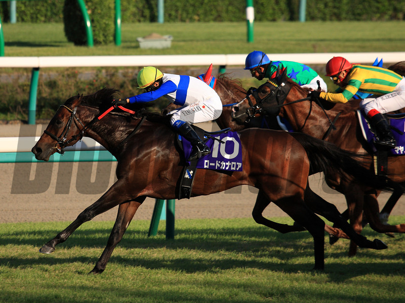 Lord Kanaloa wins the Spinsters Stakes Sept. 29, 2013 at Nakayama Racecourse.<br /> Naoji Inada Photo