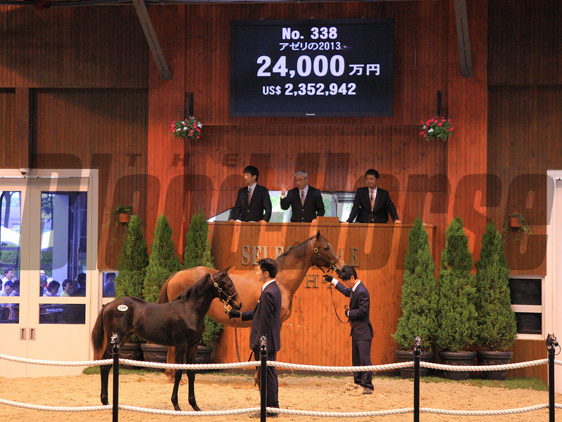 A Deep Impact colt out of U.S. Horse of the Year Azeri topped the Japan Racing Horse Association's foal session at ¥240,000,000 ($2,374,011 in U.S. funds) July 9 at Northern Horse Park in Hokkaido.<br /> Naoji Inada Photo