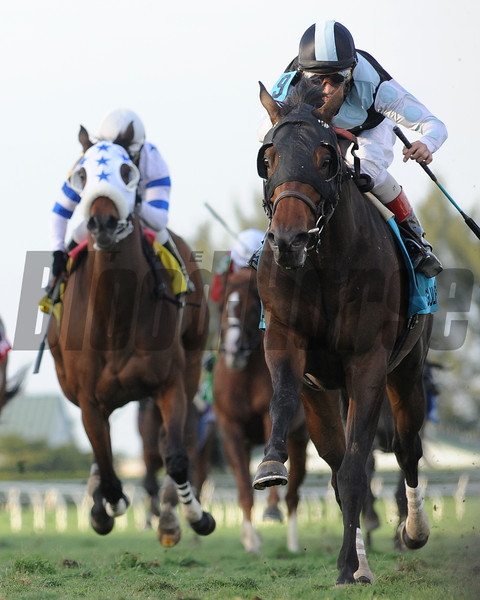 Amira's Prince wins the 2013 Mac Diarmida Stakes.<br /> Coglianese Photos/Courtney Heeney