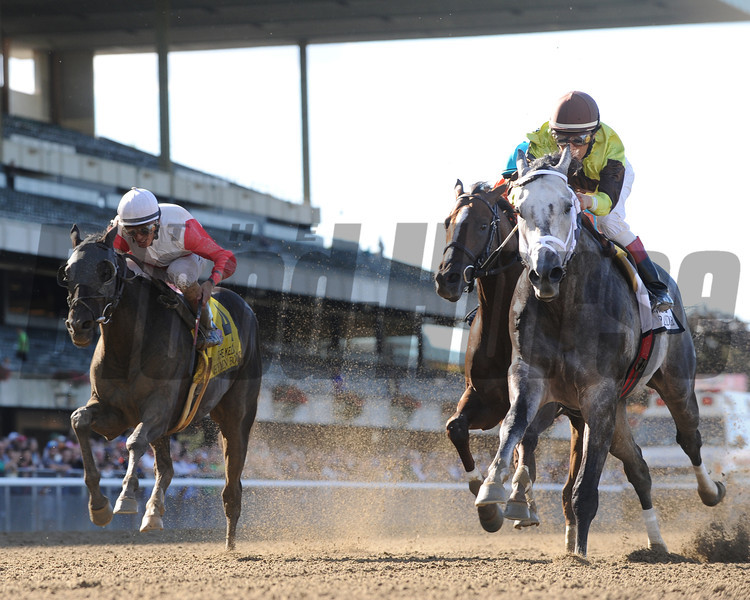 Graydar wins the Kelso Handicap at Belmont Park.<br /> Coglianese Photos