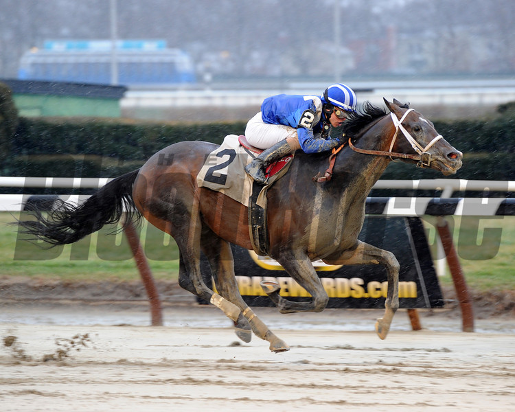 Farhaan wins the 2013 Lord of the Night Stakes.<br /> Coglianese Photos