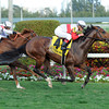 Data Link wins the 2013 Canadian Turf.<br /> Coglianese Photos/Leslie Martin