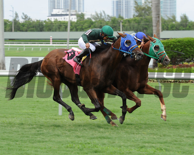 Backseat Memories/Grand Tito dead heat in 2013 Showing Up Stakes.<br /> Coglianese Photos/Leslie Martin
