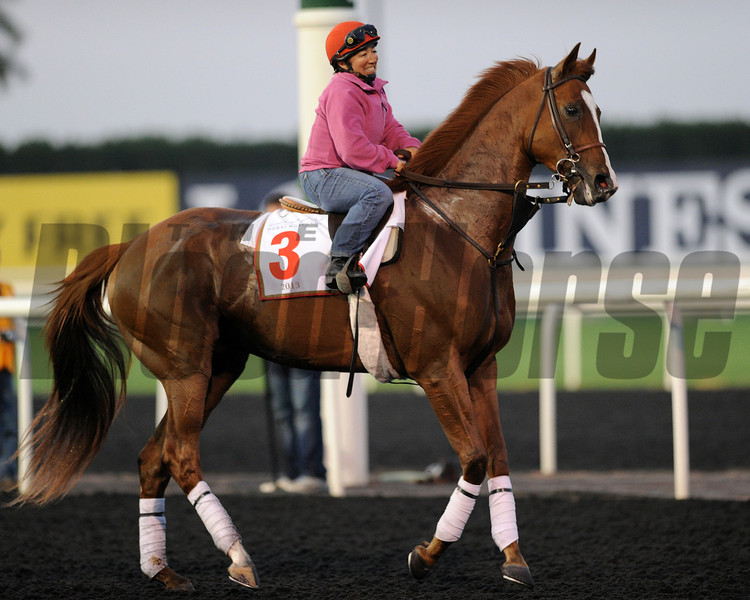 Dullahan, Meydan, March 27th, 2013, photo by Mathea Kelley, Dubai World Cup 2013,