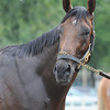Palace Malice works 8/18/2013.<br /> Coglianese Photos/Susie Raisher