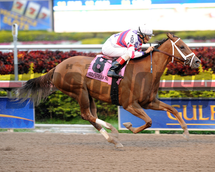 Fusaichiswonderful wins the 2013 Primal Force Stakes.<br /> Coglianese Photos/Courtney Heeney