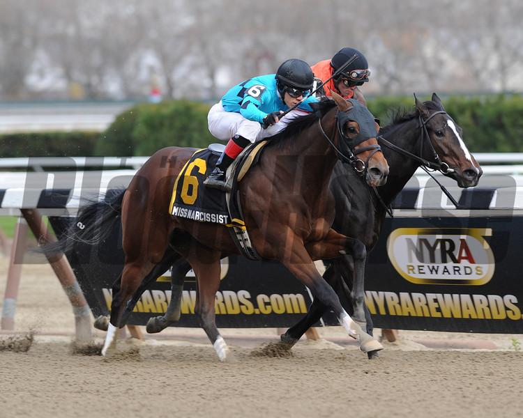 Miss Narcissist wins the 2013 New York Stallion Series.<br /> Coglianese Photos