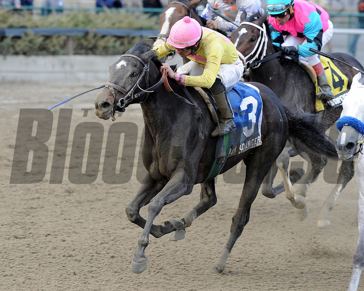 Vicki's Dancer wins the 2013 New York Stallion Series.<br /> Coglianese Photos