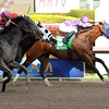 Fort Loudon wins the 2013 Gulfstream Park Sprint Championship.<br /> Coglianese Photos/Leslie Martin