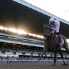 Ron the Greek wins the 2013 Jockey Club Gold Cup.<br /> Coglianese Photos