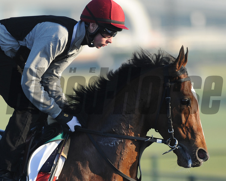 St Nicholas Abbey with Joseph O'Brien; Meydan; March 29th; 2013; photo by Mathea Kelley; Dubai Sheema Classic;