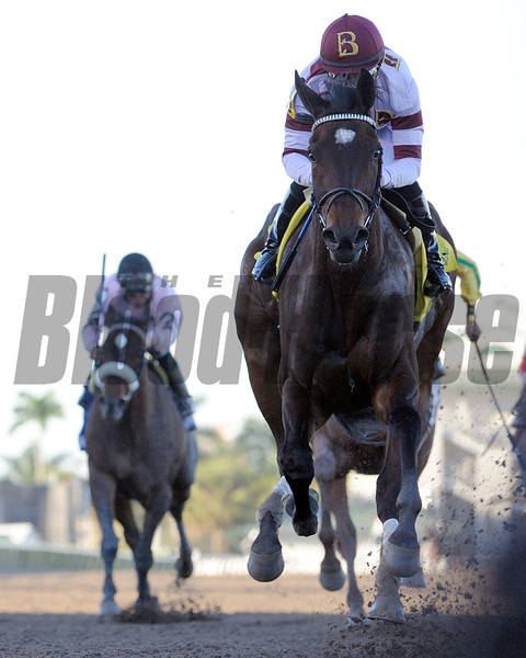 Royal Delta wins the Sabin Stakes.<br /> Photo by Coglianese Photos/Courtney Heeney