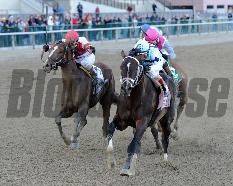 Verrazano wins the 2013 Wood Memorial.<br /> Coglianese Photos/Chelsea Durand