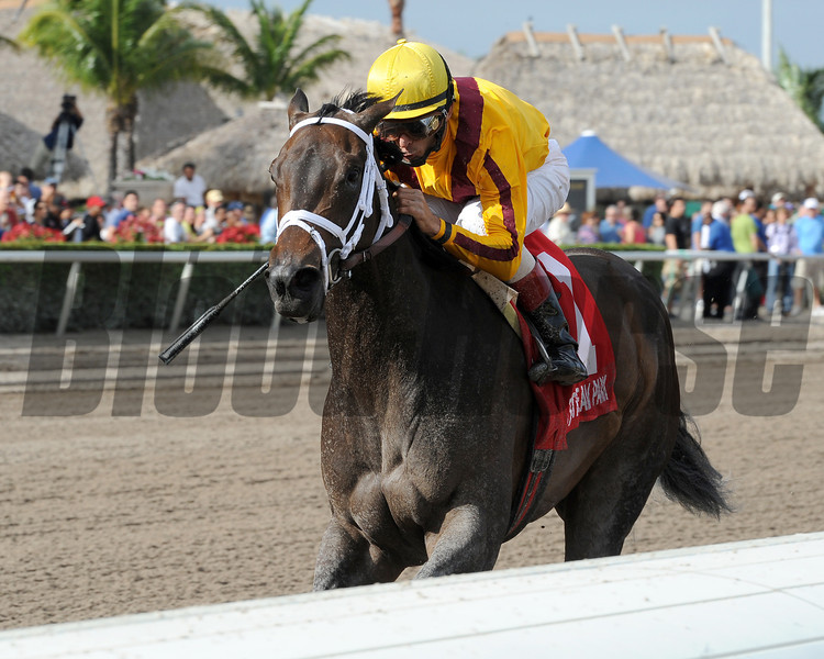 Kauai Katie wins the 2013 Old Hat Stakes.<br /> Coglianese Photos/Kenny Martin