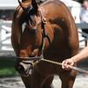 Moreno - Saratoga, July 25, 2013.<br /> Coglianese Photos
