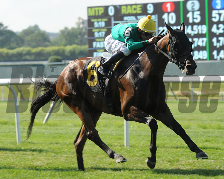 King Kreesa wins the 2013 Poker.<br /> Coglianese Photos