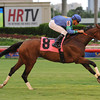 Angelica Zapata win the 2013 Wasted Tears Stakes.<br /> Coglianese Photos/Leslie Martin