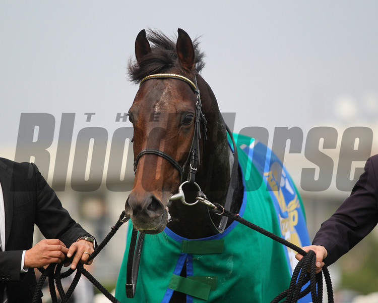 Tosen Ra wins the Mile Championship at Kyoto Racecourse, Japan.<br /> Masakazu Takahashi