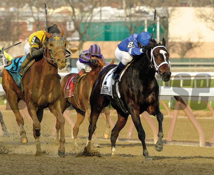 Wedding Toast wins the 64th running of The Comely at Aqueduct Nov. 30, 2013, in Ozone Park, N.Y.  Photo ©Skip Dickstein 2013
