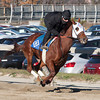 Groupie Doll works at Belmont Park, November 25, 2013.<br /> Coglianese Photos/Susie Raisher