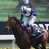 Lord Kanaloa wins the Hong Kong Sprint.<br /> Masakazu Takahashi Photo