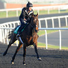 Royal Diamond, Meydan, March 29th, 2013, photo by Mathea Kelley, Dubai World Cup 2013, Dubai Sheema Classic