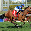 Regalo Mia wins the 2013 Orchid.<br /> Coglianese Photos/Leslie Martin