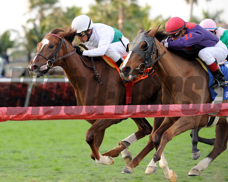 Kitten's Point wins the 2013 Herecomesthebride Stakes.<br /> Coglianese Photos/Kenny Martin