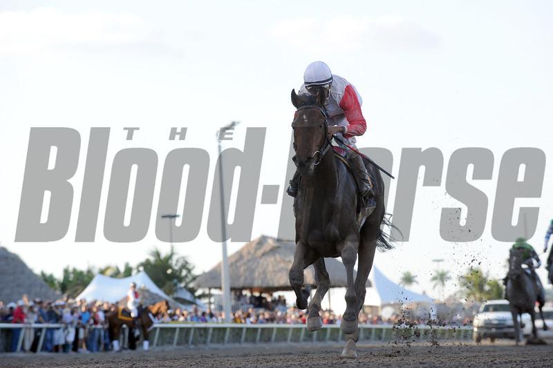 Orb wins the 2013 Florida Derby<br /> Coglianese Photos