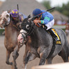 Singanothersong wins the Mr. Prospector Stakes.<br /> Coglianese Photos/Kenny Martin