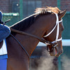 Alpha Works at Belmont Park, November 16, 2013. <br /> Coglianese Photos/Susie Raisher