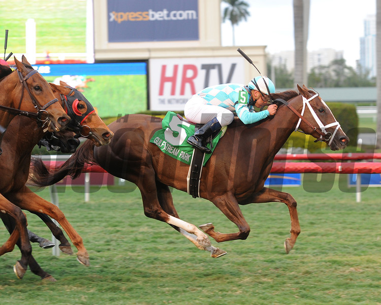 Channel Lady wins the 2013 Suwannee River Stakes.<br /> Coglianese Photos/Leslie Martin