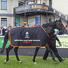 Magician after winning the 2013 Tattersalls Irish 2,000 Guineas at the Curragh.<br /> Photo by: Trevor Jones