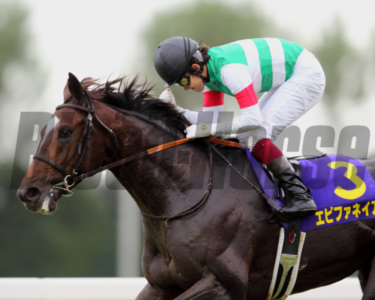 Runner-up in the first two jewels of Japan's Triple Crown earlier this year, regally bred Epiphaneia broke through for a classic win in smashing style in the Kikuka Sho (Jpn-I, Japanese St. Leger) Oct. 20 at Kyoto.<br /> Photo by Masakazu Takahashi