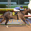 Singanothersong wins the Mr. Prospector Stakes.<br /> Coglianese Photos/Leslie Martin