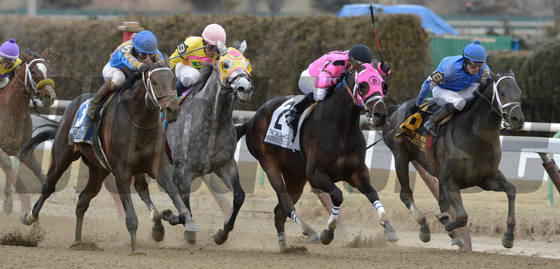 Comma to the Top wins the Tom Fool with jockey Joel Rosario at Aqueduct Race Course 3/3/13.  Photo by Skip Dickstein