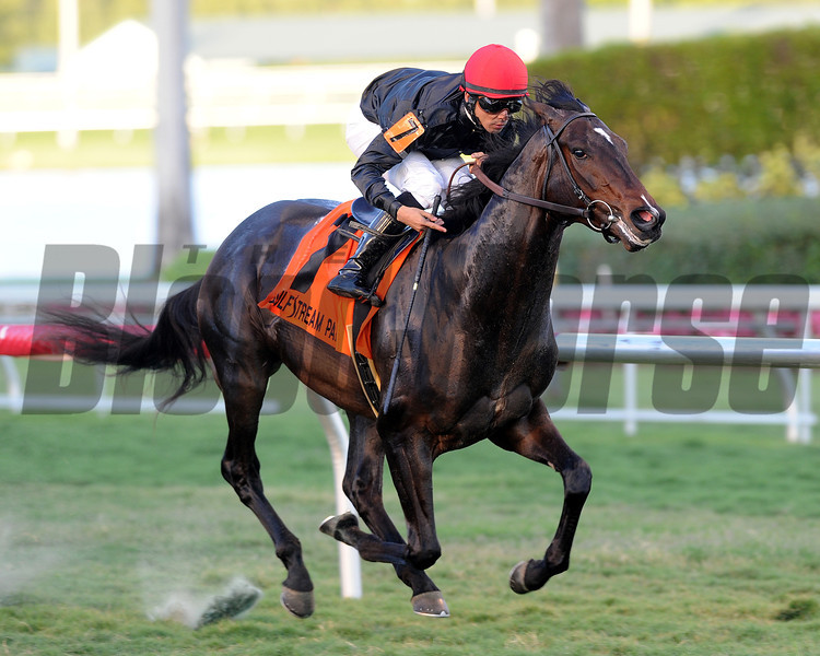 Mr Speaker wins the 2013 Dania Beach Stakes.<br /> Coglianese Photos/Lauren King