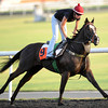 Sole Power, March 27th, 2013, photo by Mathea Kelley, Dubai World Cup 2013, Al Quoz Sprint