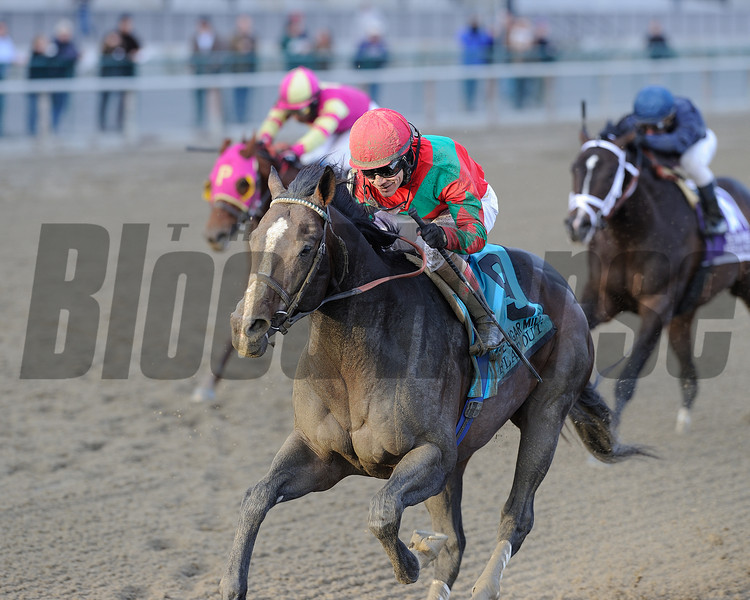 Flat Out wins the 2013 Cigar Mile.<br /> Coglianese Photos/Chelsea Durand