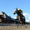 Cross Traffic wins the 2013 Whitney.<br /> Coglianese Photos